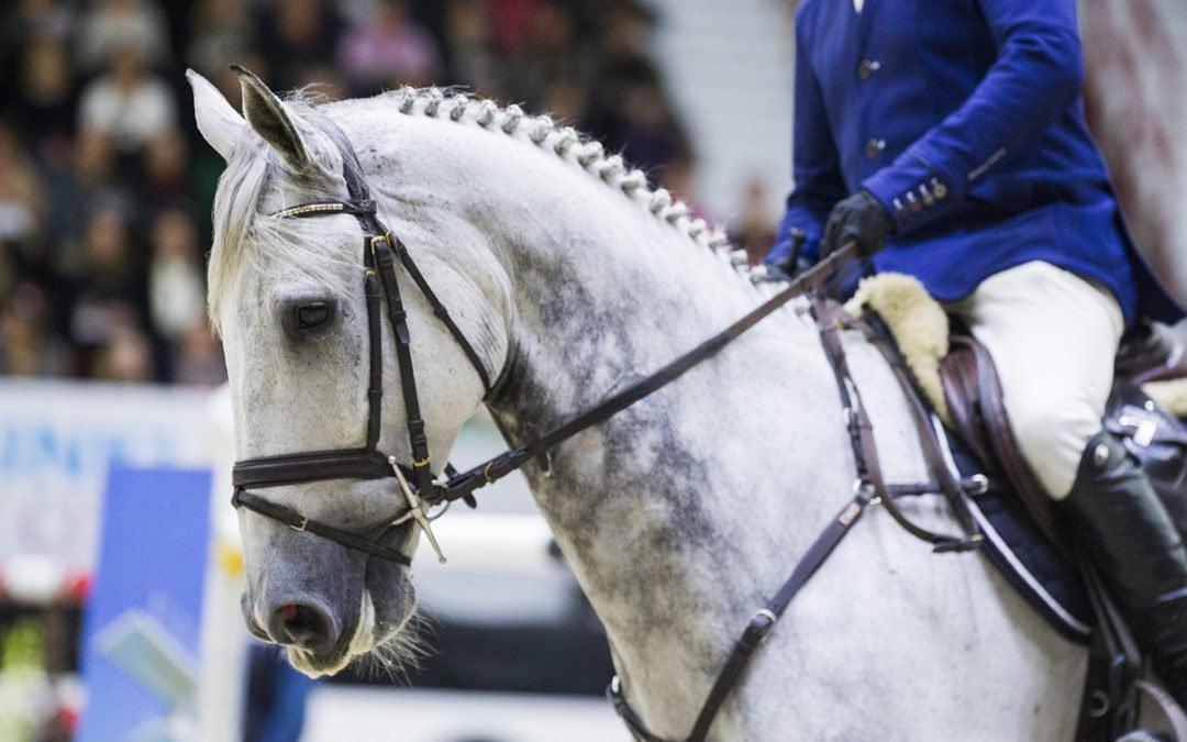 Helsinki Horse Show'nMiniklinikat – Yleisölle tarjolla huippukiinnostavaa sisältöä