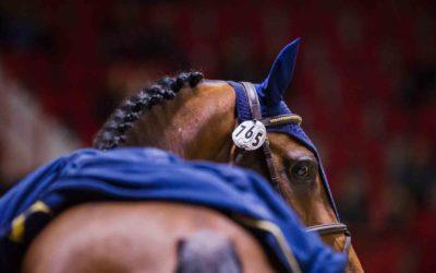Nuoret hevoset aloittivat kisan