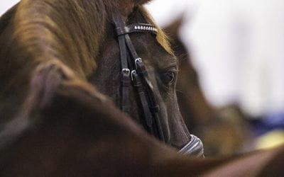 Äidille mahtava lippulahja Horse Show'hun